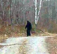 Photograph of Bigfoot in the woods.  See more photos and videos of Saquatch now on the world wide web.