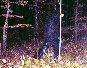 Bigfoot in the northwoods? Camera picks up strange image near Remer